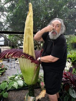Peeee-uw: John Catlan at his Jacobs Well home with a corpse plant flowering in his backyard. Picture: Campbell Scott.