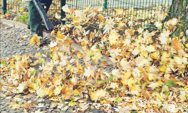 clearing of pavement from autumn leaves by leaf blower
