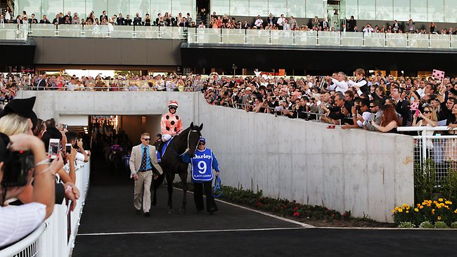 Black Caviar walks towards the course proper before the T.J. Smith Stakes. Picture: Rohan Kelly