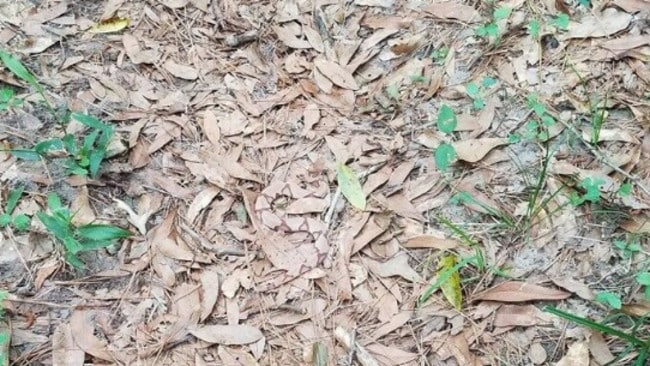 Can we mark a lizard in a leaves?
