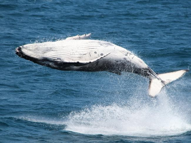 'Whaling has no place in the 21st century'