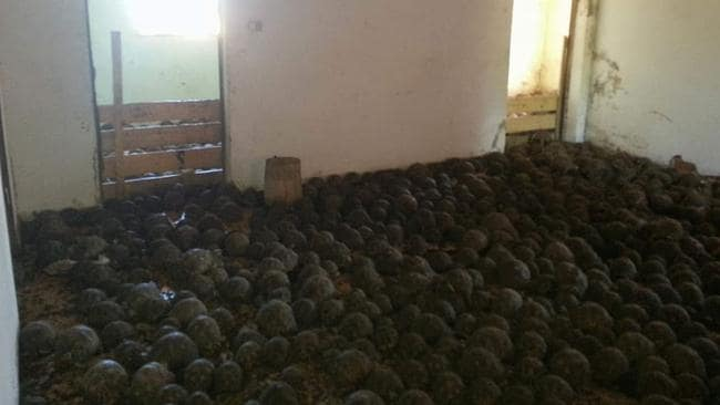 Madagascar Officials Discover 10 000 Stolen Tortoises In Home