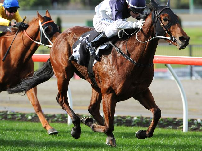 Craig Newitt riding Nordic Empire wins the Mitchelton Wines Handicap at Moonee Valley. Picture: Getty Images