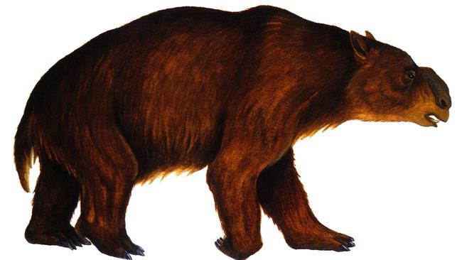 A trace fossil site on Kangaroo Island revealed the wombat-like diprotodon.