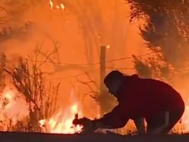Man rescues a rabbit from the California wildfires. Picture: Reuters