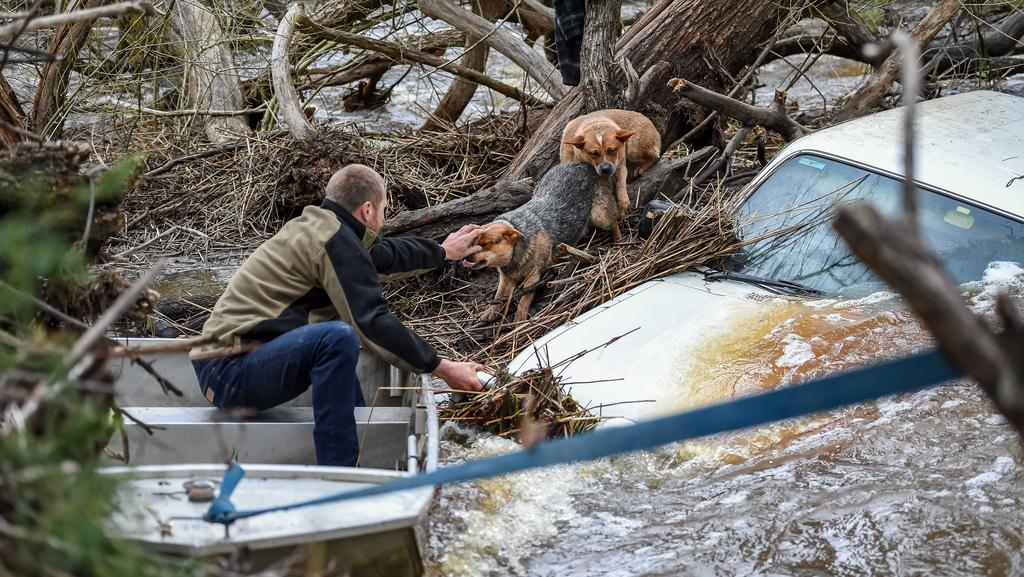 Dogs Rescued From The Roof Of A Car Submerged In Flood