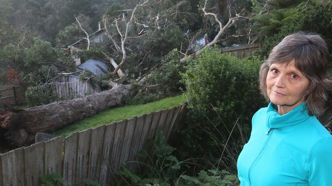 Neighbour Shakti McLaren looks over to the house where the tree fell. Picture: Hamish Blair