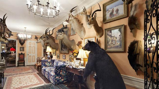 The entrance way will the full display of animals. Pictures: Halstead Property.