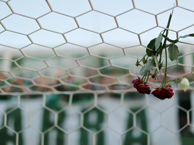 A flower hangs from a net during a tribute to the players of Brazilian team Chapecoense Real. Picture: Heuler Andrey/Getty Images