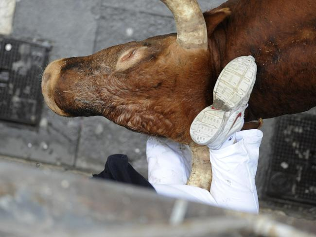 A runner is gored by the Miura bull during the last bull run of the San Fermin Festival in Pamplona, northern Spain, on July 14, 2014. AFP PHOTO/ ANDER GILLENEA