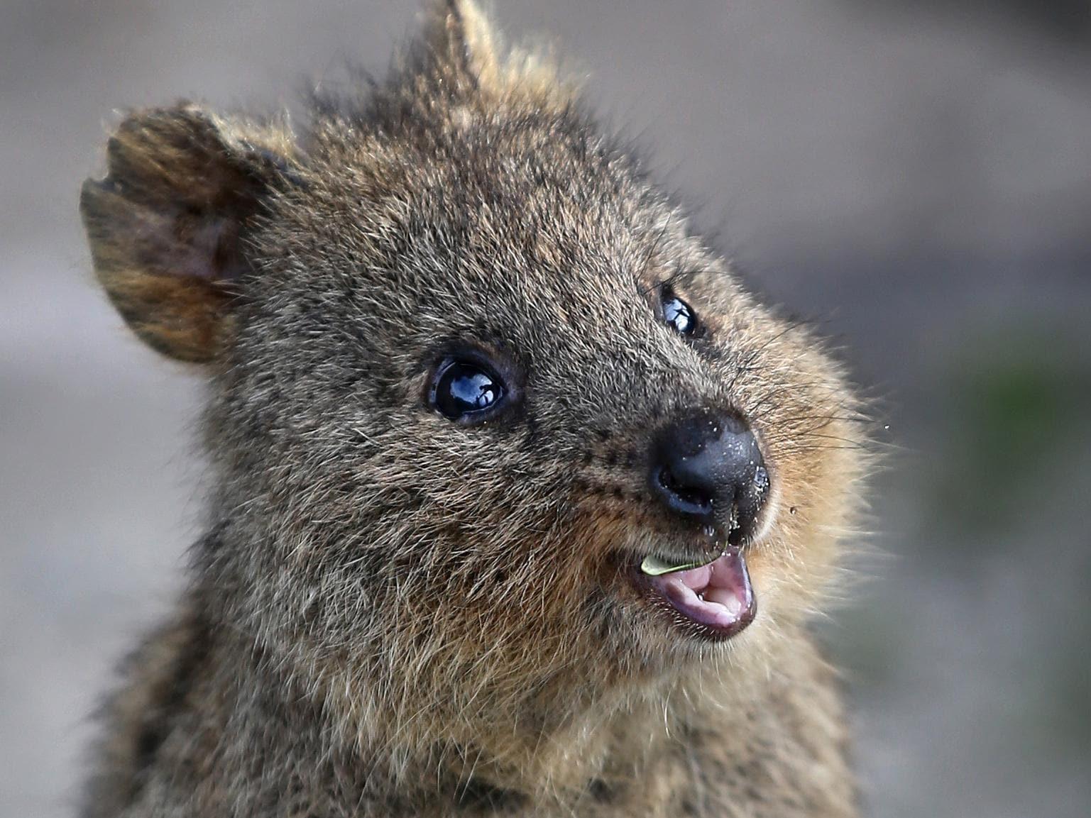 Instagram compares quokka selfies to animal cruelty