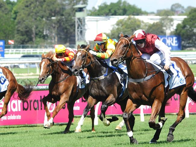 Trainer Peter Snowden has three runners — race favourite Earthquake, Ghibellines and Memorial. Picture: Simon Bullard