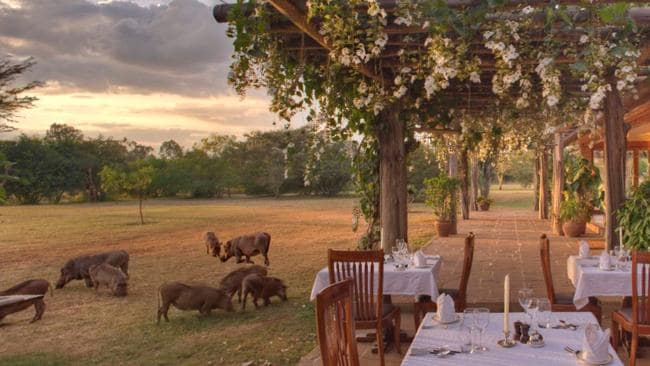 Africa adventure ... Enjoy dinner surrounded by local wildlife at Hogmead in Kenya. Picture: Knight Frank.