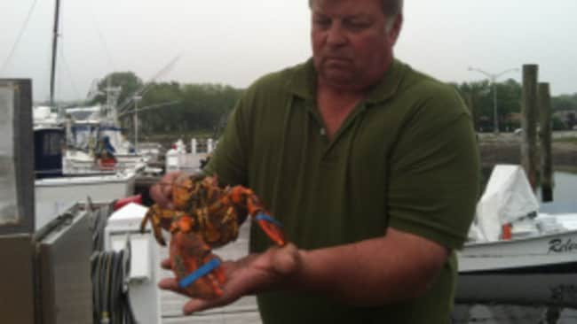 Yellow mellow... Jere Lacoske holding the freshly caught lobster that appears to be cooked. Picture: WTNH