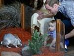 <p>Meeting his first bilby, George is helped by mum and dad, the Duke and Duchess of Cambridge at Taronga Zoo during their Australia visit. Picture: Getty</p>