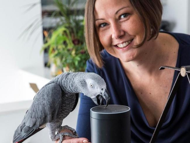 Buddy shocked his owner Corienne Pretorius by shopping online via Amazon's Alexa voice-controlled system. Picture: SWNS/Mega
