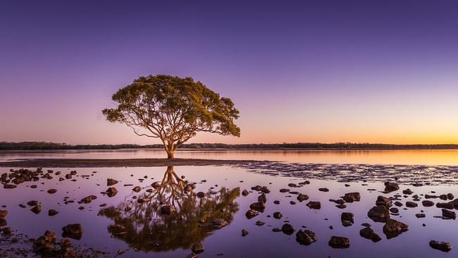 The most photographed tree — Brighton Tree, at the end/start of Hornibrook Bridge. Photographer: Matt Sheumack