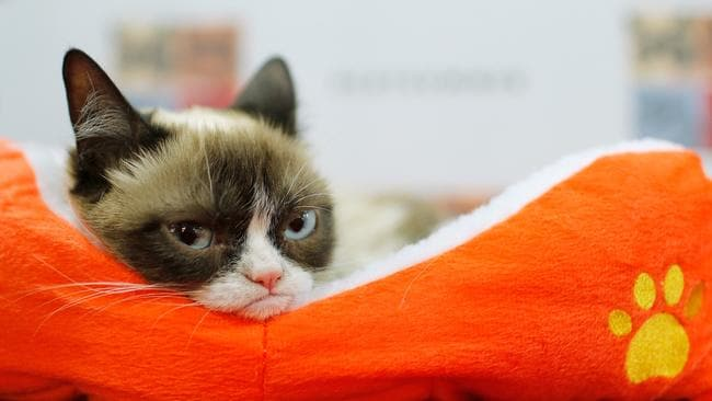 "Grumpy Cat attends the ""Cat Summer"" video launch party in New York City."