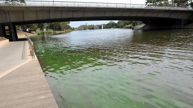 Household Cleaning Chemical To Combat River Torrens Algae