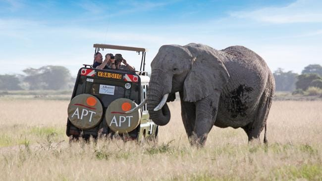 An elephant on an APT safari tour in Africa. Picture: Supplied