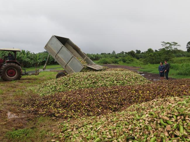Craig Reucassel inspects a mountain of bananas discarded in just one day.Source: News.com.au courtesy ABC