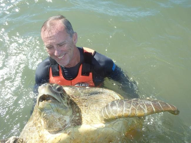 A researcher catches a green turtle at Upstart Bay in Queensland as part of a sampling trip. Picture: Supplied