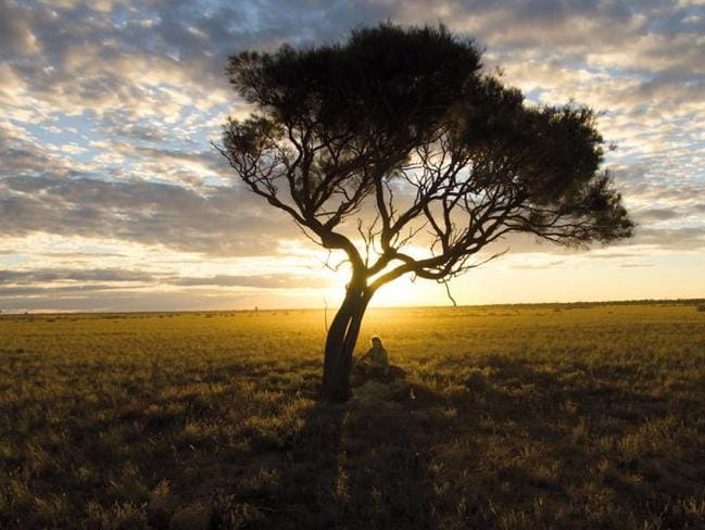 Sarah Marquis where it all ended, under a lone tree in the South Australian outback. Picture: Lynn Webb