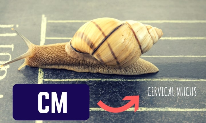 <b>CERVICAL MUCUS.</b> Also called CF (Cervical Fluid), cervical mucus is the stuff you never wanted to think about too much - and now obsess over. It's your snail trail. Study the stuff and you will realise its colour, consistency, and viscosity will tell you when you are at your most fertile.