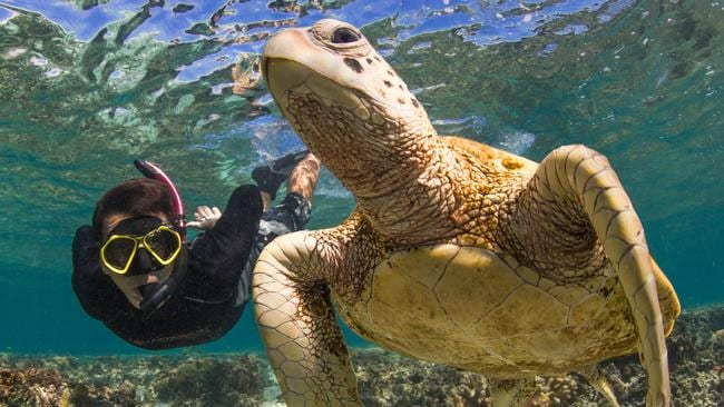 According to the study, tourists can cause irreparable and fatal damage to sea turtles when handling them.