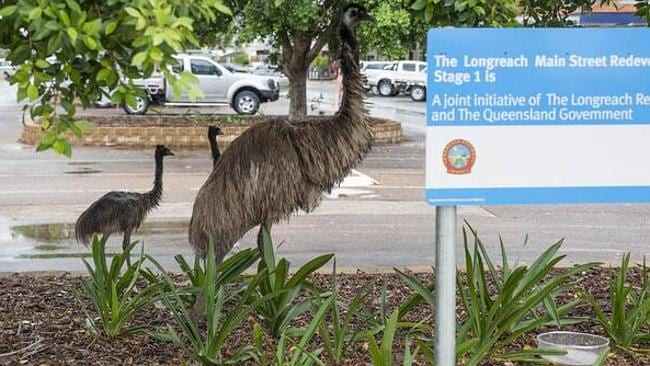 An emu and chicks saunter through a Longreach car park. Pic: Deb Scott