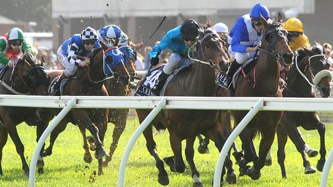 Last-start winner Absalon will be suited by the extra distance at Kensington on Saturday.