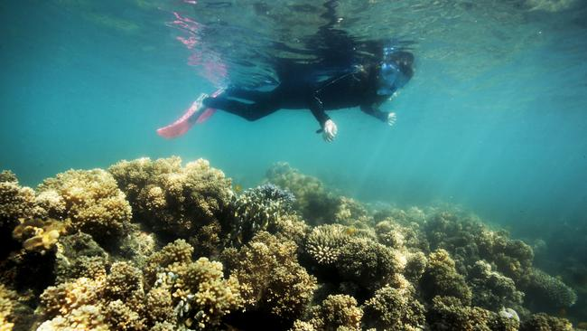 the great barrier reef a majestic product of mother nature Mother nature can save the great barrier reef if we help her  heat stressed or  overexposed to sunlight, they instead produce a toxin.