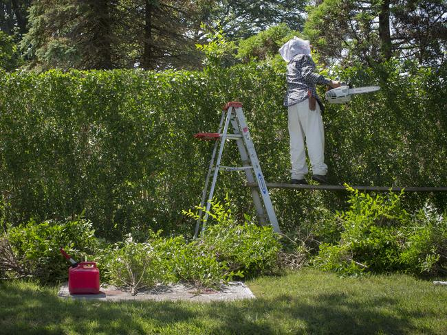 A landscaper working on hedges in the Hamptons.