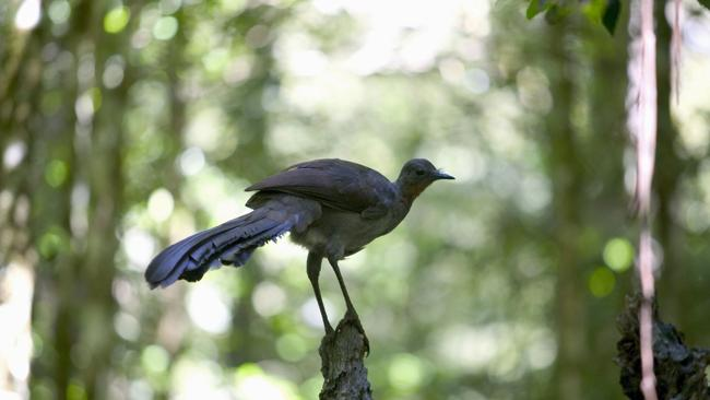 There is rich birdlife in Dorrigo. Picture: Supplied