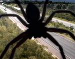 <p>George the spider made his home in a traffic surveillance camera on the M4 in Sydney.</p>