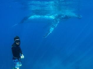 ESCAPE: BEST FOR 2017 .. Diving with Humpback whales on Ningaloo Reef. Picture: Coral Bay Eco Tours
