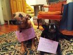 "<span>There's no end to the shame. Picture:</span>  <span><a href=""http://dogshaming.tumblr.com/"">Dog Shaming</a> <br /> </span>"