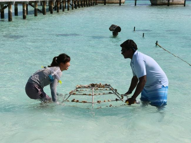 The completed frame is carried into the coral nursery to settle. Picture: Celeste Mitchell