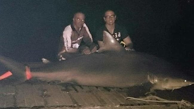 A bull shark caught in the Hastings River near Port Macquarie in an area popular with sum