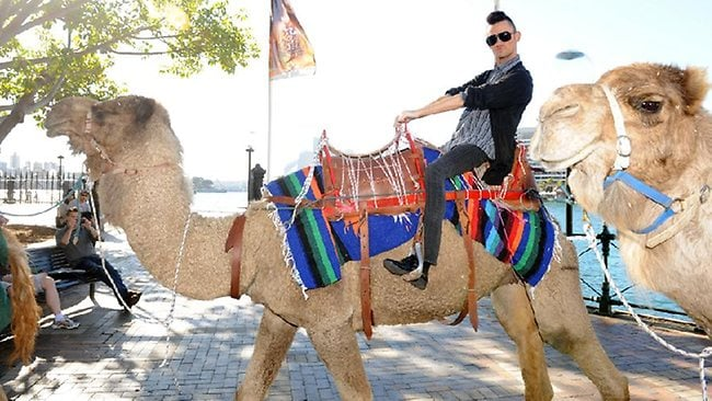 Matt Young. Camel. Photobomb. What could be better? (Pic: Melvyn Knipe)