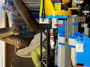 An eastern brown snake was found wrapped around a child's playset in a Gold Coast home today. Picture supplied by Tony Harrison of