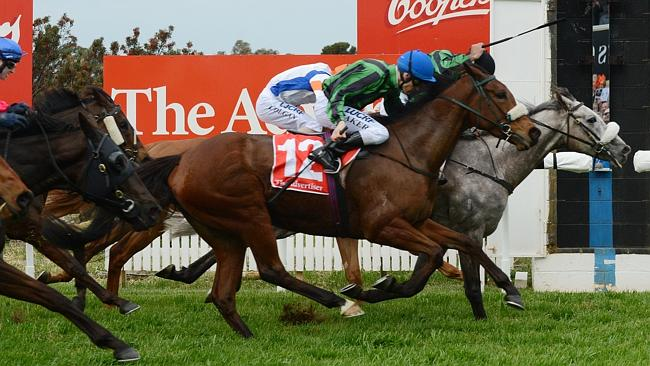 Gris Caro clings to the rails to record an impressive first-up win in the Balaklava Cup this month.