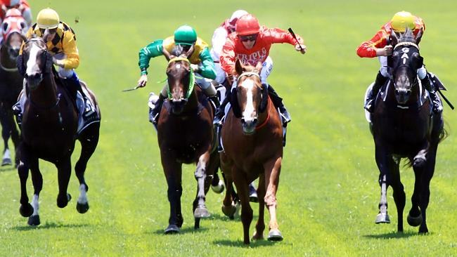 The Gerald Ryan-trained Dothraki is $12 into $10 in race four at Flemington. Picture: Mark Evans
