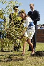 Catherine, Duchess of Cambridge, watched by Prince William, Duke of Cambridge, plants a Plunkett Mallee tree at the Memorial Garden during a visit to the Royal Australian Airforce Base at Amberley on April 19, 2014 in Brisbane. Picture: Getty