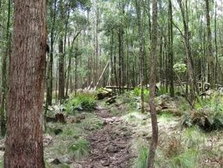 Macedon National Park. Picture: Supplied