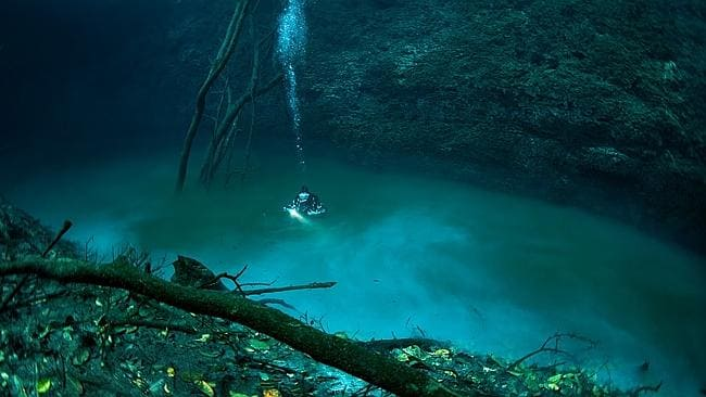 There are even trees with leaves to compliment these underwater rivers.