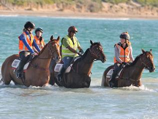 Enjoying a swim at the Warrnambool foreshore are L-R: Gailo Chop,Amelia's Star(obscured), Tosen Stardom & Big Duke. 18/10/2017 Pic by ROBIN SHARROCK