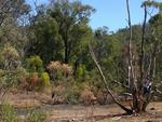 PARKS FOR PEOPLE: Dwellingup. Picture: Kathleen Jancec