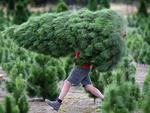 How to find your perfect Christmas tree