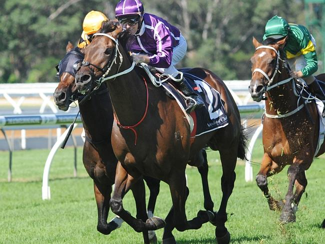 Horse of the Year contender Boban will spearhead Chris Waller's Doncaster Mile assault. Picture: Simon Bullard